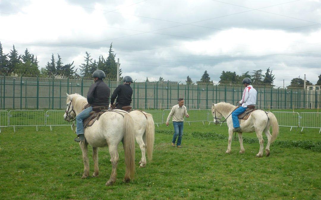 Réinsertion de détenus: des chevaux pour lever les obstacles