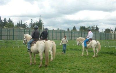 Réinsertion de détenus par les chevaux à Nimes